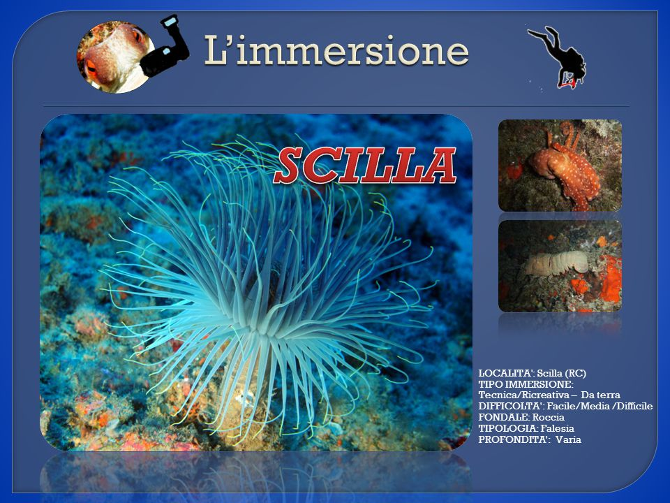 SCILLA L'immersione LOCALITA : Scilla (RC) TIPO IMMERSIONE: