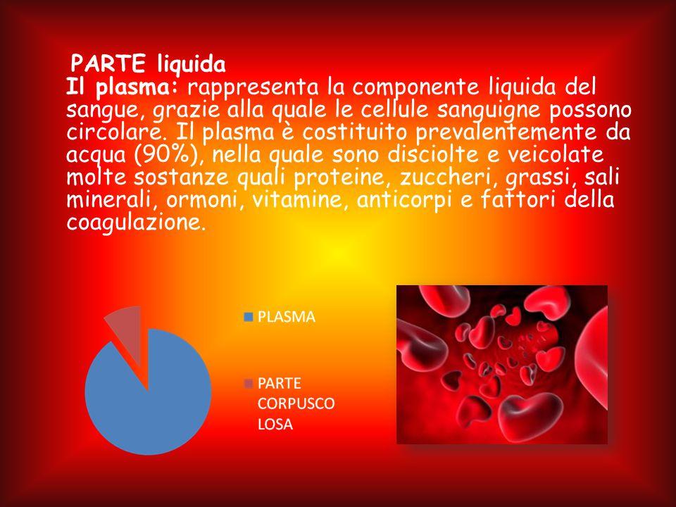 PARTE liquida Il plasma: rappresenta la componente liquida del sangue, grazie alla quale le cellule sanguigne possono circolare.