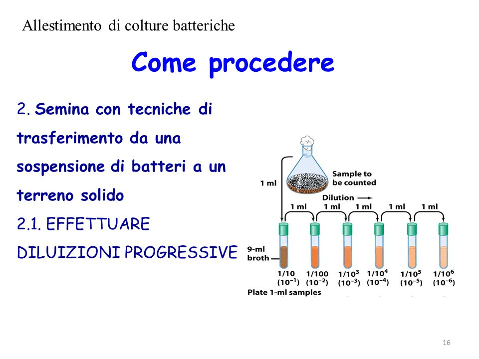 Allestimento di colture batteriche
