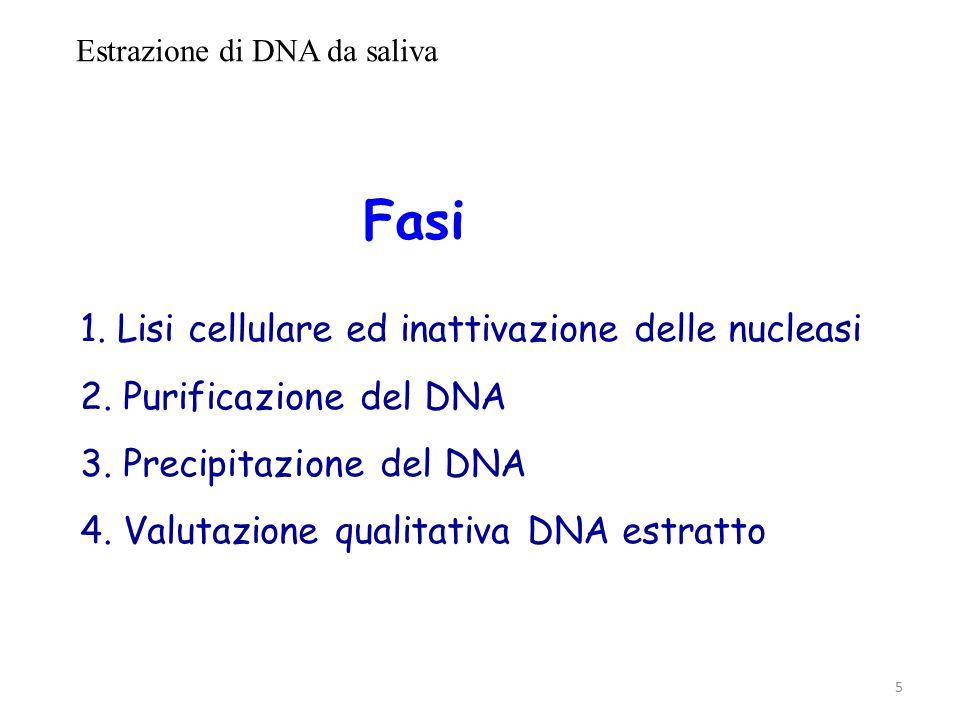 Estrazione di DNA da saliva