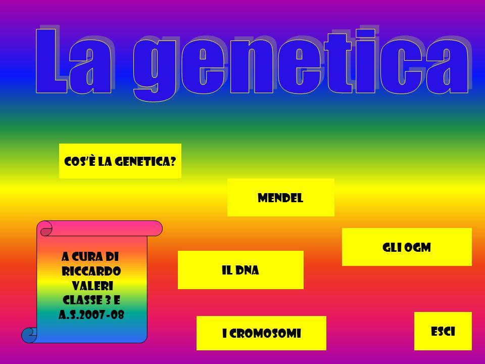 La genetica Cos'è la genetica Mendel A cura di Gli ogm Riccardo
