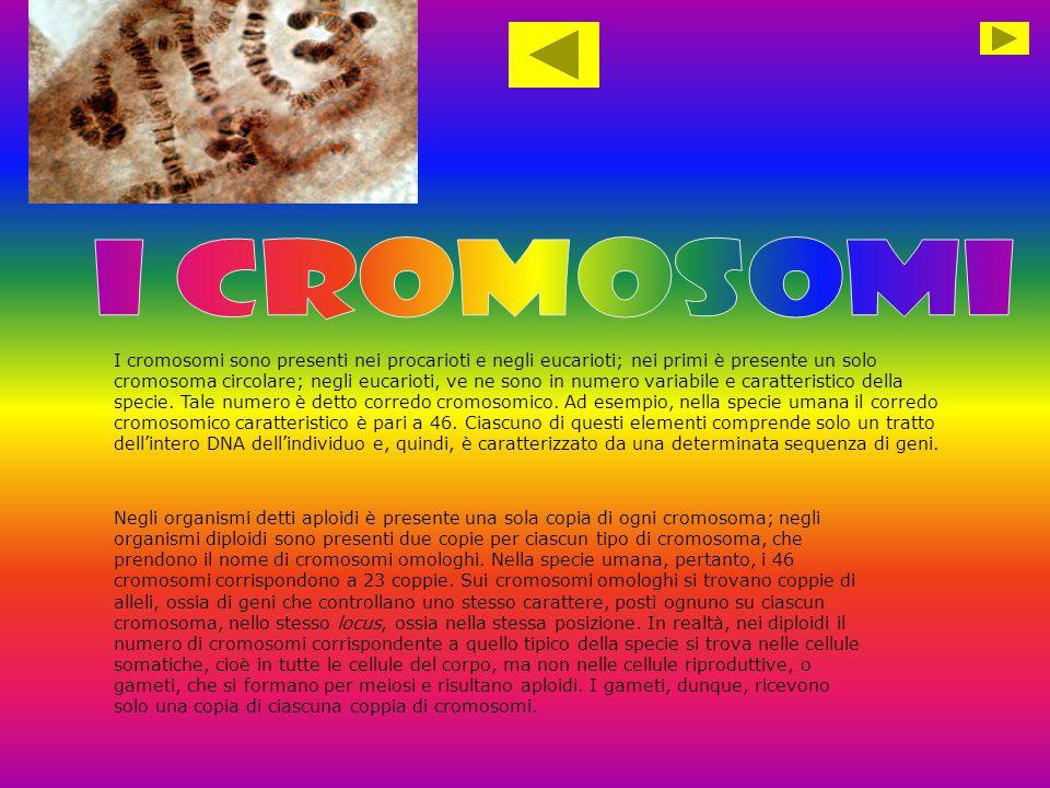 i cromosomi 2.1 Cromosomi omologhi