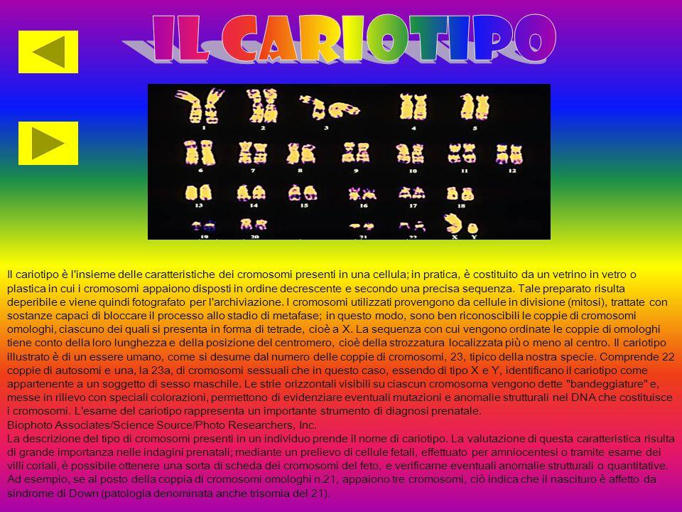 Il cariotipo