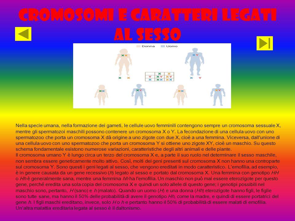 Cromosomi e caratteri legati al sesso