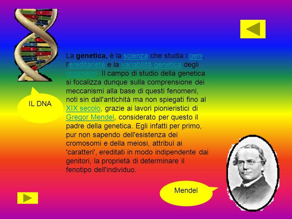 La genetica, è la scienza che studia i geni, l ereditarietà e la variabilità genetica degli organismi. Il campo di studio della genetica si focalizza dunque sulla comprensione dei meccanismi alla base di questi fenomeni, noti sin dall antichità ma non spiegati fino al XIX secolo, grazie ai lavori pionieristici di Gregor Mendel, considerato per questo il padre della genetica. Egli infatti per primo, pur non sapendo dell esistenza dei cromosomi e della meiosi, attribuì ai caratteri , ereditati in modo indipendente dai genitori, la proprietà di determinare il fenotipo dell individuo.