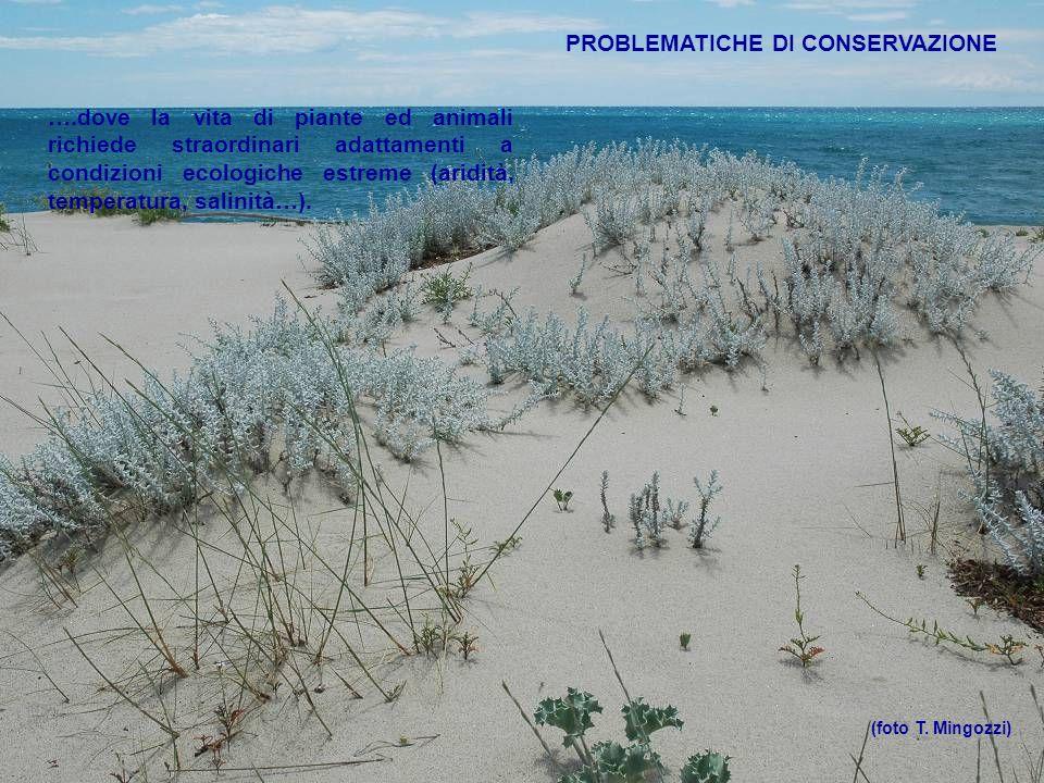 PROBLEMATICHE DI CONSERVAZIONE