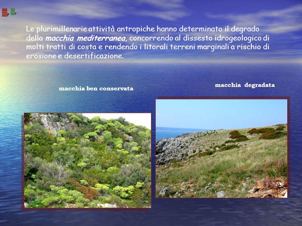 Le plurimillenarie attività antropiche hanno determinato il degrado della macchia mediterranea, concorrendo al dissesto idrogeologico di molti tratti di costa e rendendo i litorali terreni marginali a rischio di erosione e desertificazione.