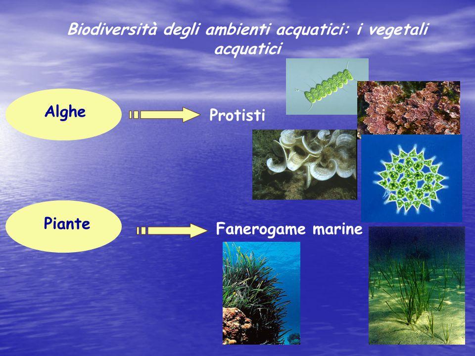 Biodiversità degli ambienti acquatici: i vegetali acquatici