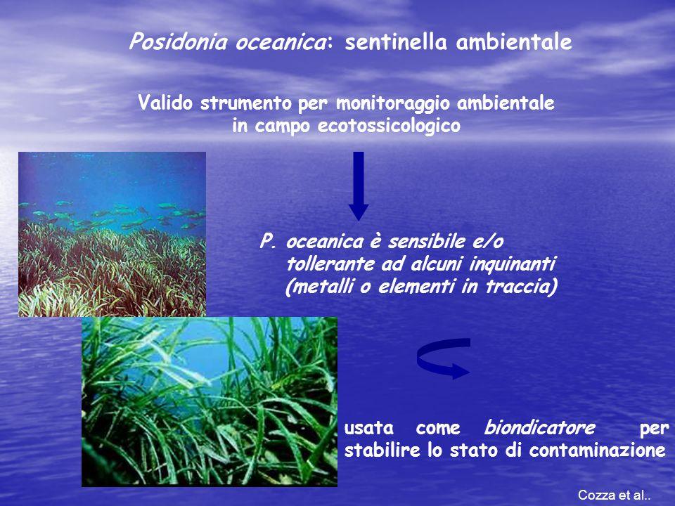 Posidonia oceanica: sentinella ambientale