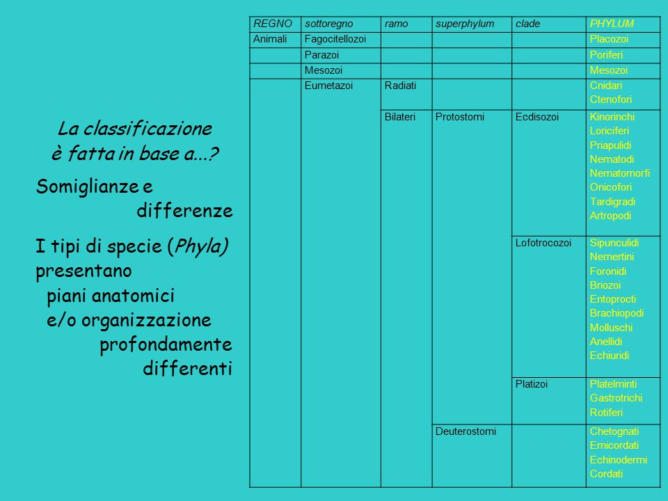 I tipi di specie (Phyla) presentano piani anatomici e/o organizzazione