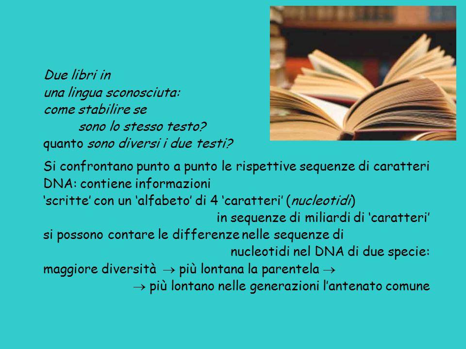 Due libri in una lingua sconosciuta: come stabilire se. sono lo stesso testo quanto sono diversi i due testi