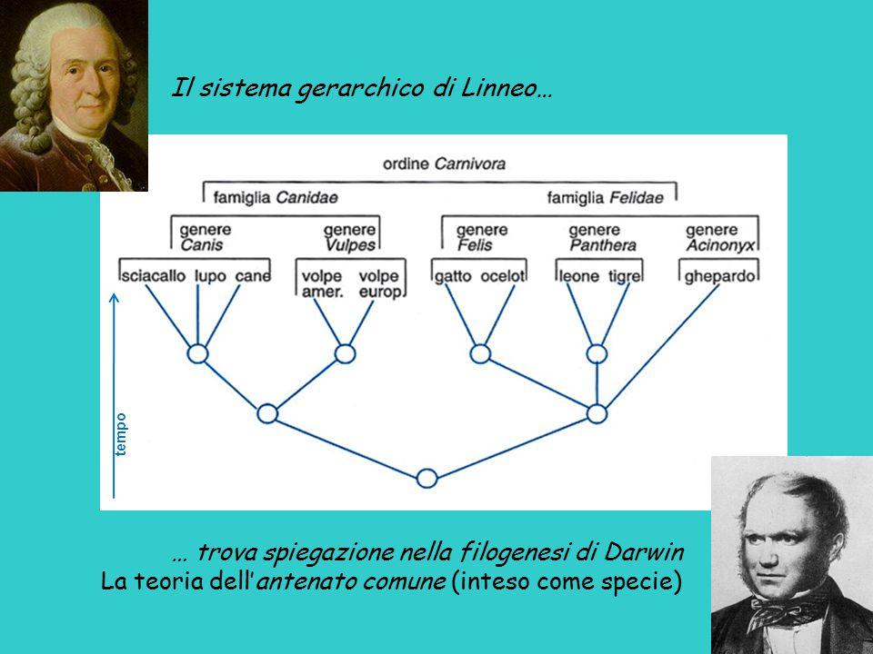 Il sistema gerarchico di Linneo…