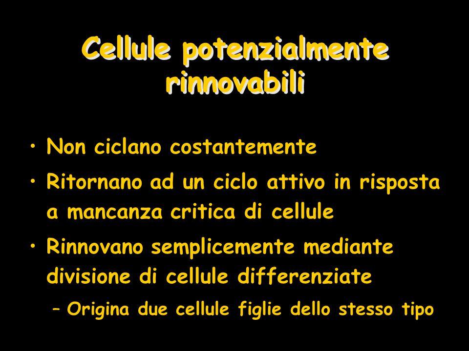 Cellule potenzialmente rinnovabili