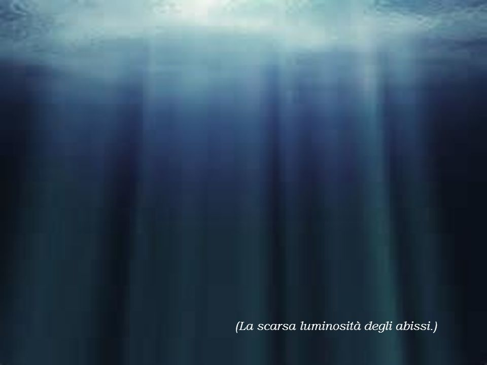 (La scarsa luminosità degli abissi.)