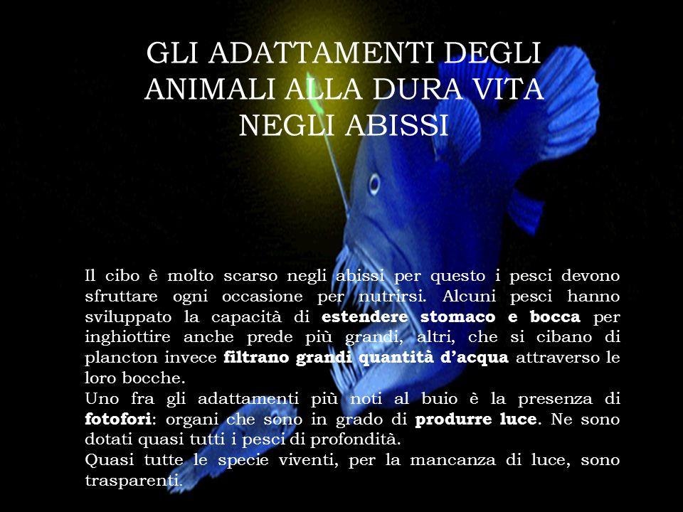 GLI ADATTAMENTI DEGLI ANIMALI ALLA DURA VITA NEGLI ABISSI