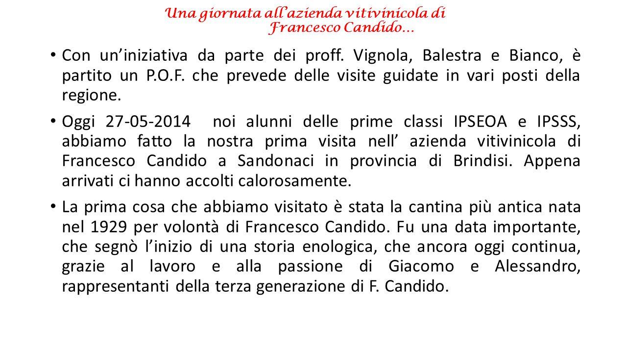 Una giornata all'azienda vitivinicola di Francesco Candido…