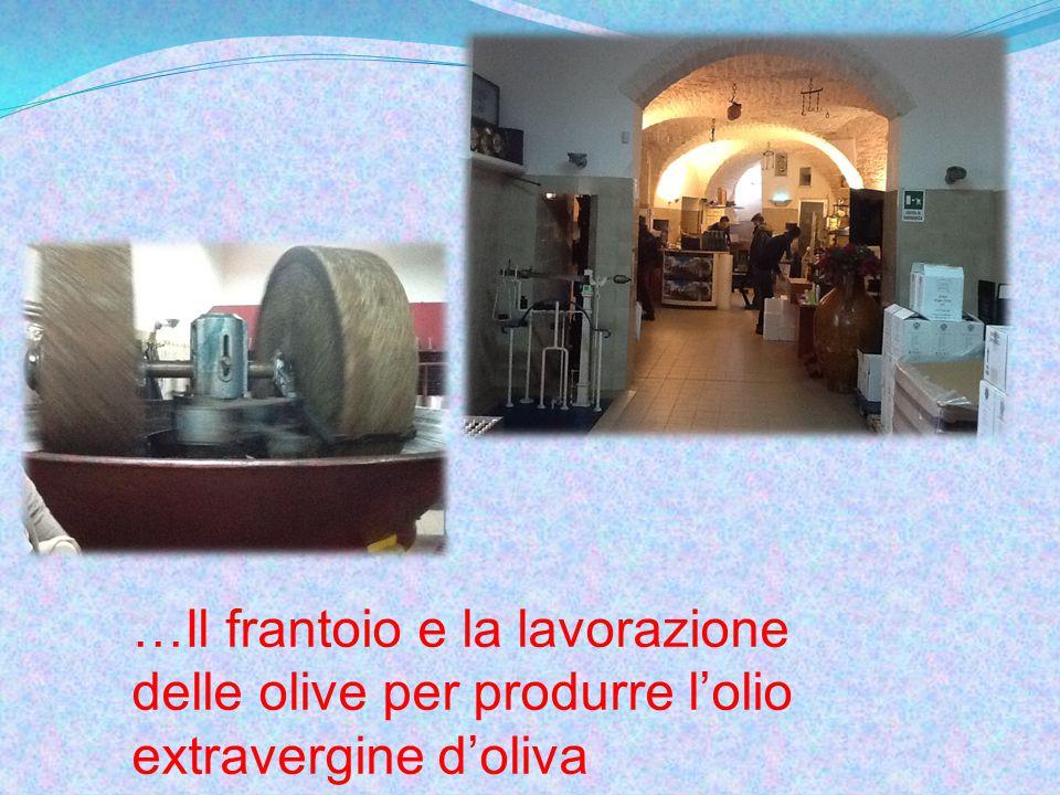 …Il frantoio e la lavorazione delle olive per produrre l'olio extravergine d'oliva