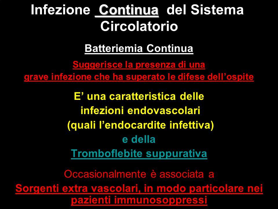 Infezione Continua del Sistema Circolatorio
