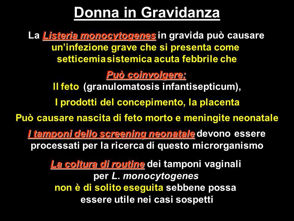 Donna in Gravidanza La Listeria monocytogenes in gravida può causare