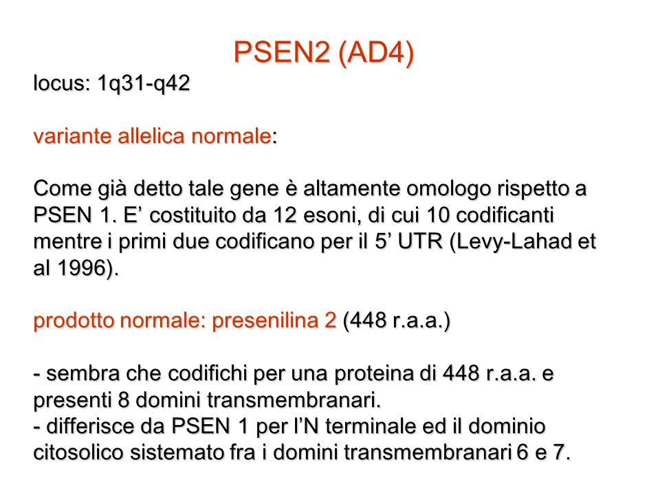 PSEN2 (AD4) locus: 1q31-q42 variante allelica normale: