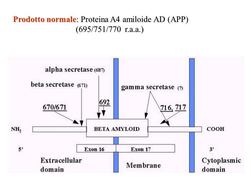 Prodotto normale: Proteina A4 amiloide AD (APP)