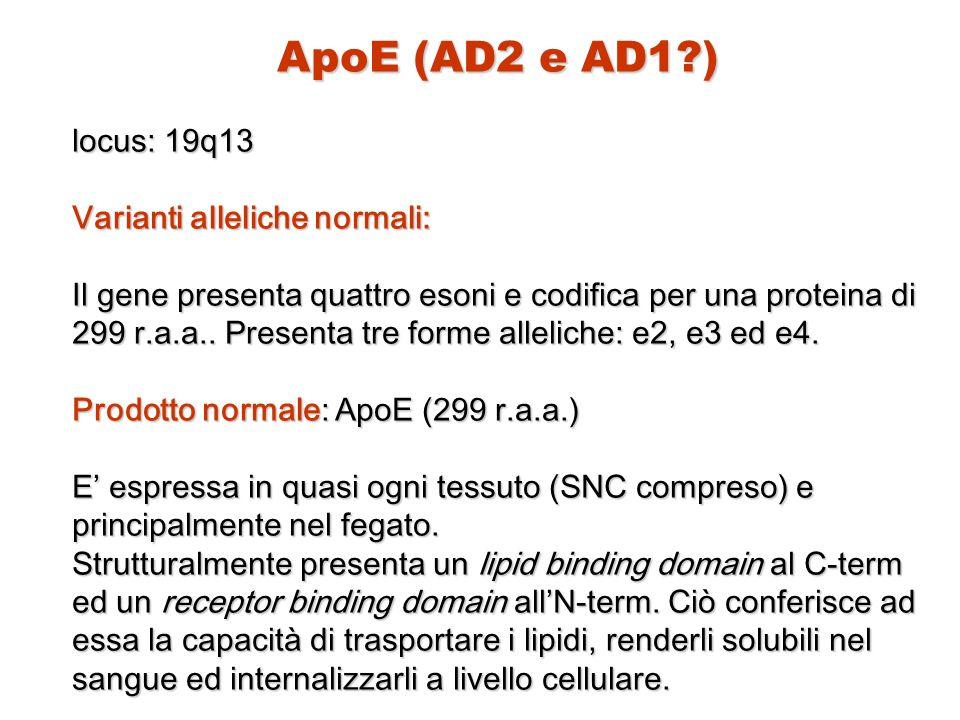 ApoE (AD2 e AD1 ) locus: 19q13 Varianti alleliche normali: