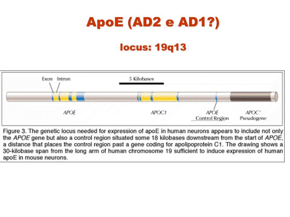 ApoE (AD2 e AD1 ) locus: 19q13
