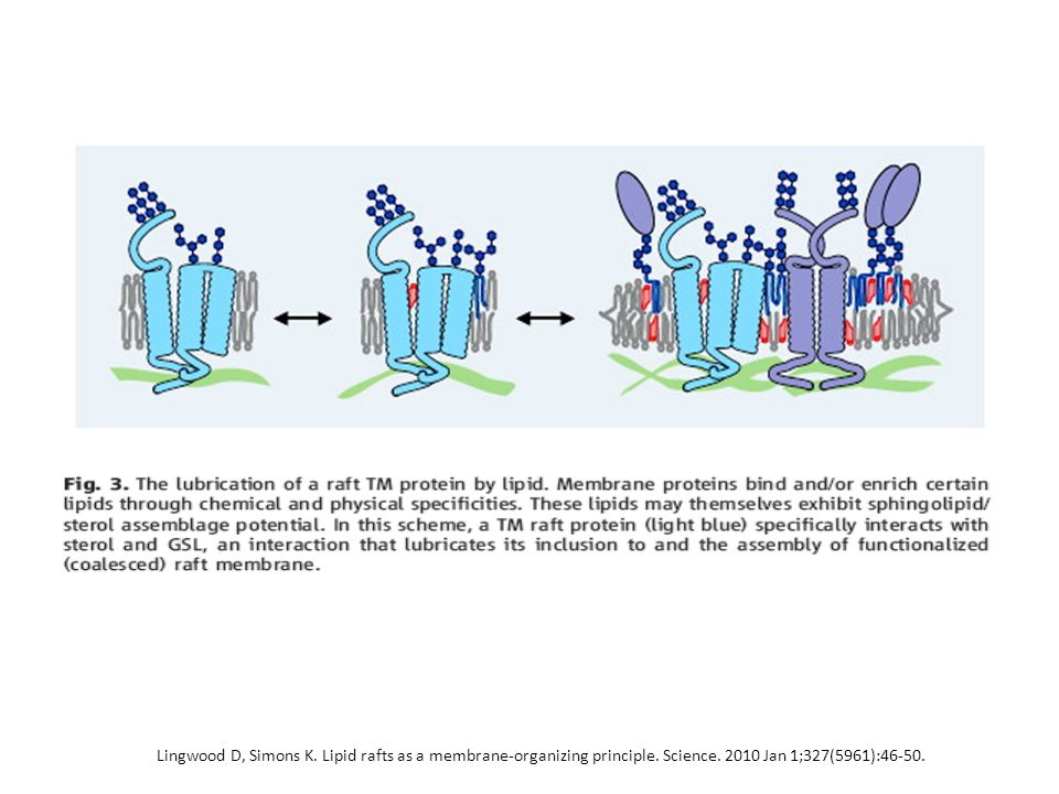 Lingwood D, Simons K. Lipid rafts as a membrane-organizing principle