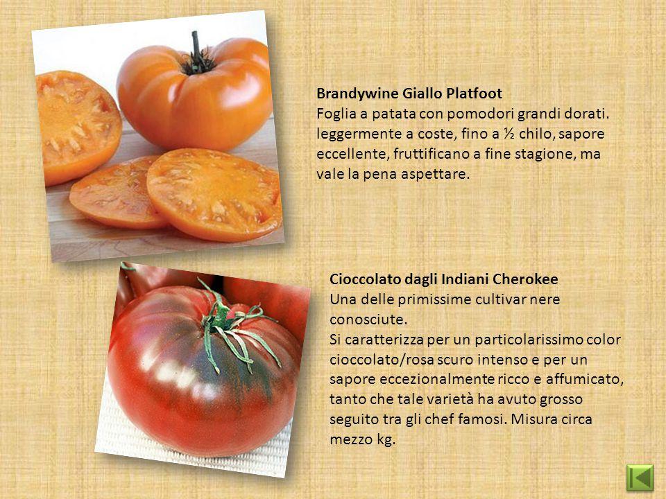 Brandywine Giallo Platfoot