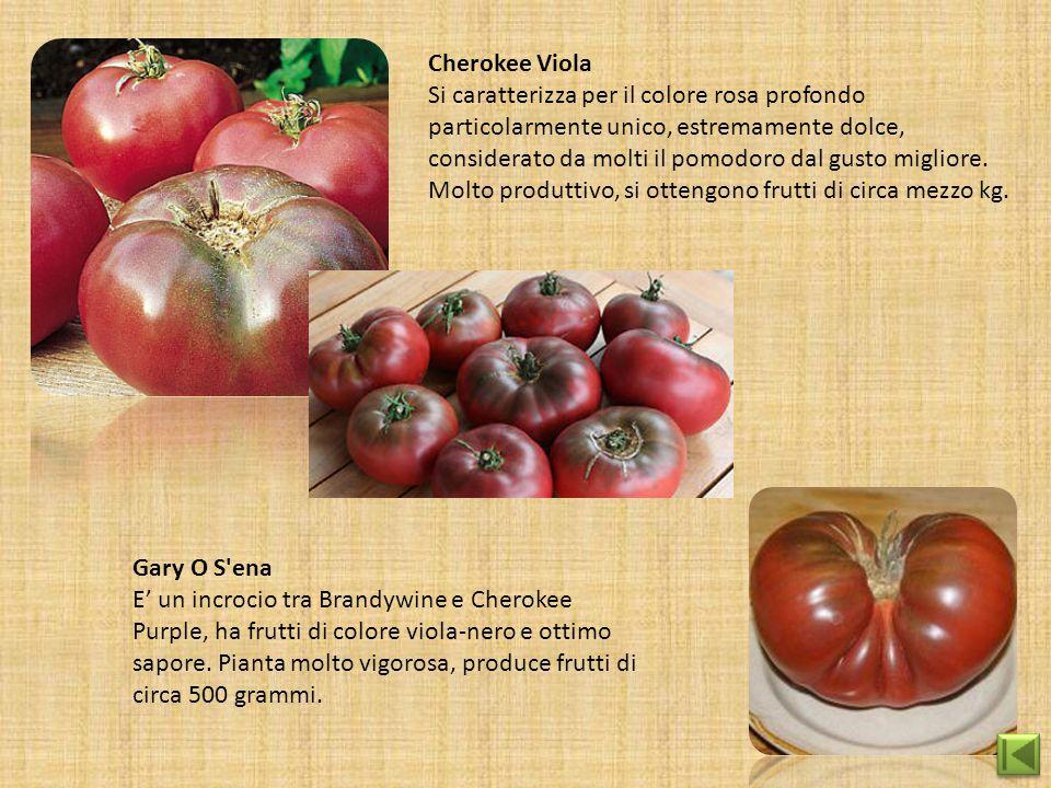 Cherokee Viola