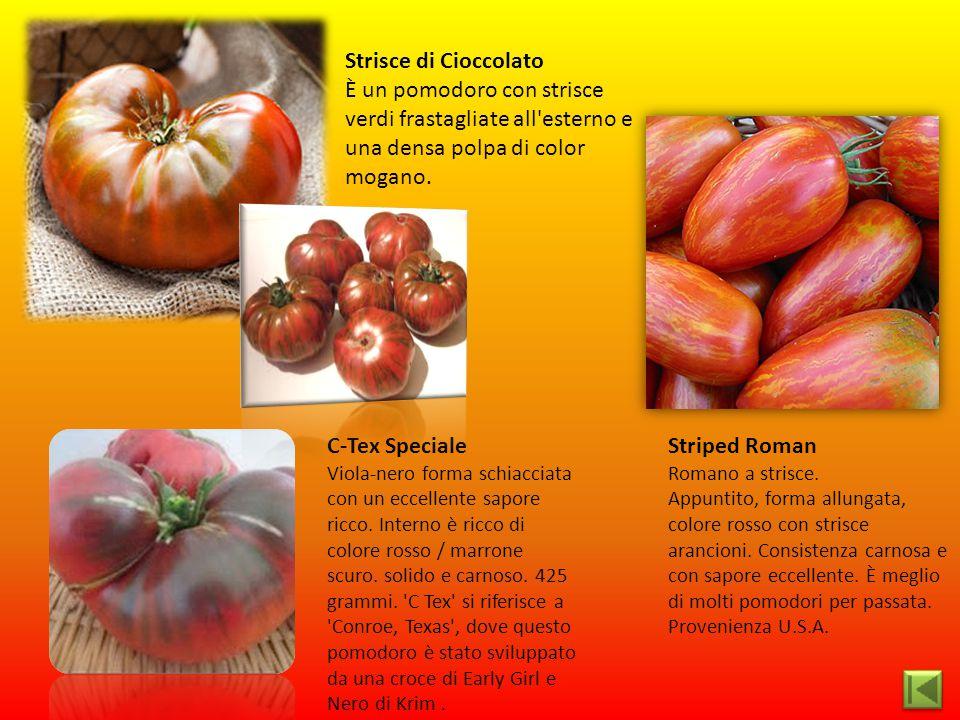 Strisce di Cioccolato È un pomodoro con strisce verdi frastagliate all esterno e una densa polpa di color mogano.