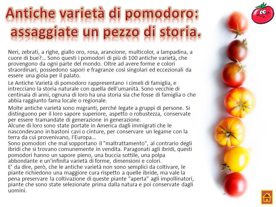 Antiche varietà di pomodoro: assaggiate un pezzo di storia.