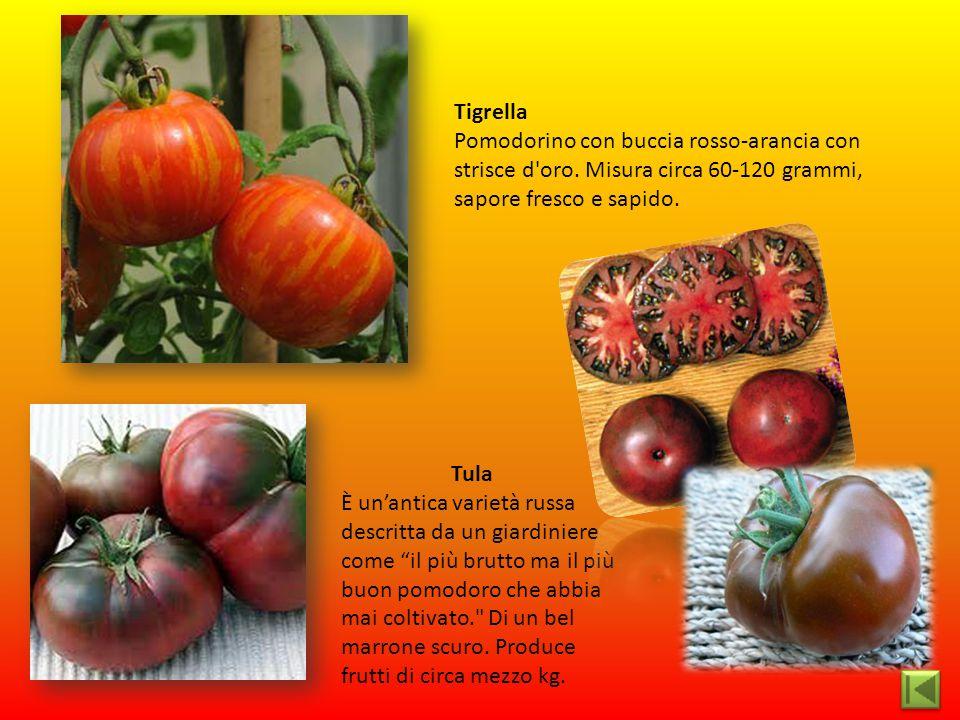 Tigrella Pomodorino con buccia rosso-arancia con strisce d oro. Misura circa 60-120 grammi, sapore fresco e sapido.