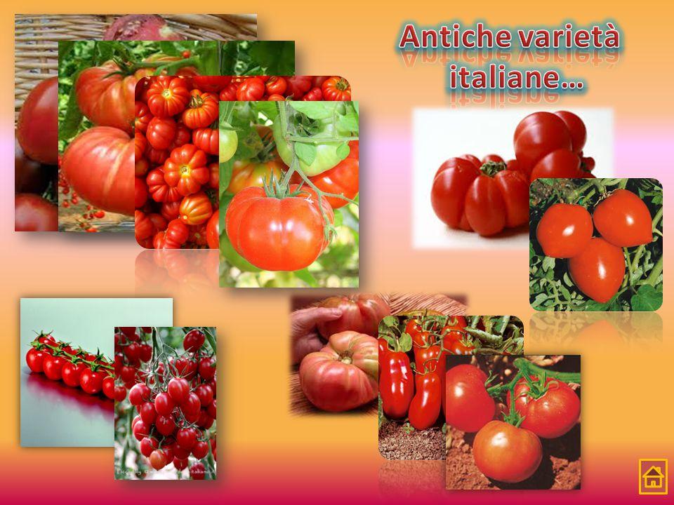 Antiche varietà italiane…