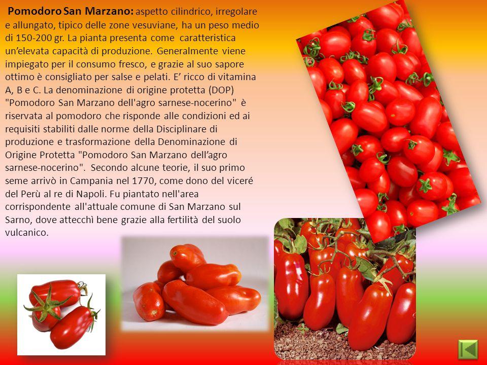 Pomodoro San Marzano: aspetto cilindrico, irregolare e allungato, tipico delle zone vesuviane, ha un peso medio di 150-200 gr.