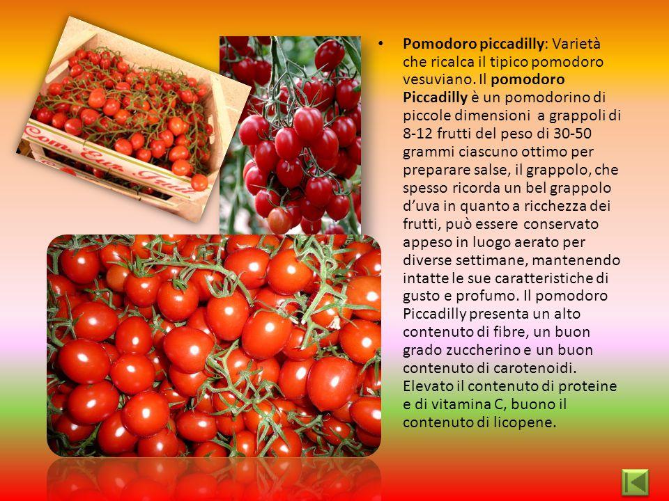 Pomodoro piccadilly: Varietà che ricalca il tipico pomodoro vesuviano