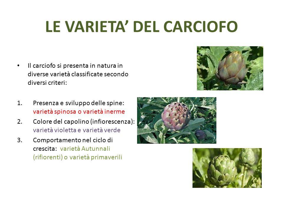 LE VARIETA' DEL CARCIOFO