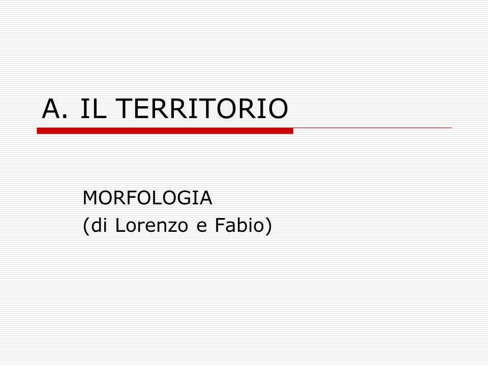 MORFOLOGIA (di Lorenzo e Fabio)