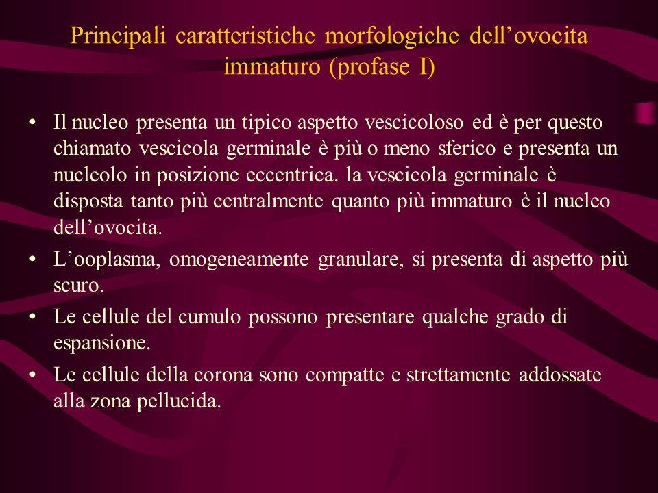 Principali caratteristiche morfologiche dell'ovocita immaturo (profase I)