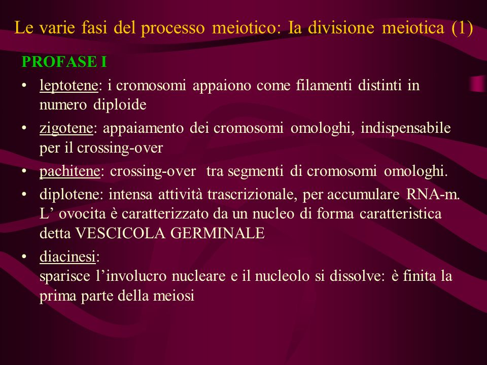 Le varie fasi del processo meiotico: Ia divisione meiotica (1)