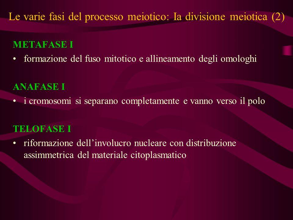 Le varie fasi del processo meiotico: Ia divisione meiotica (2)