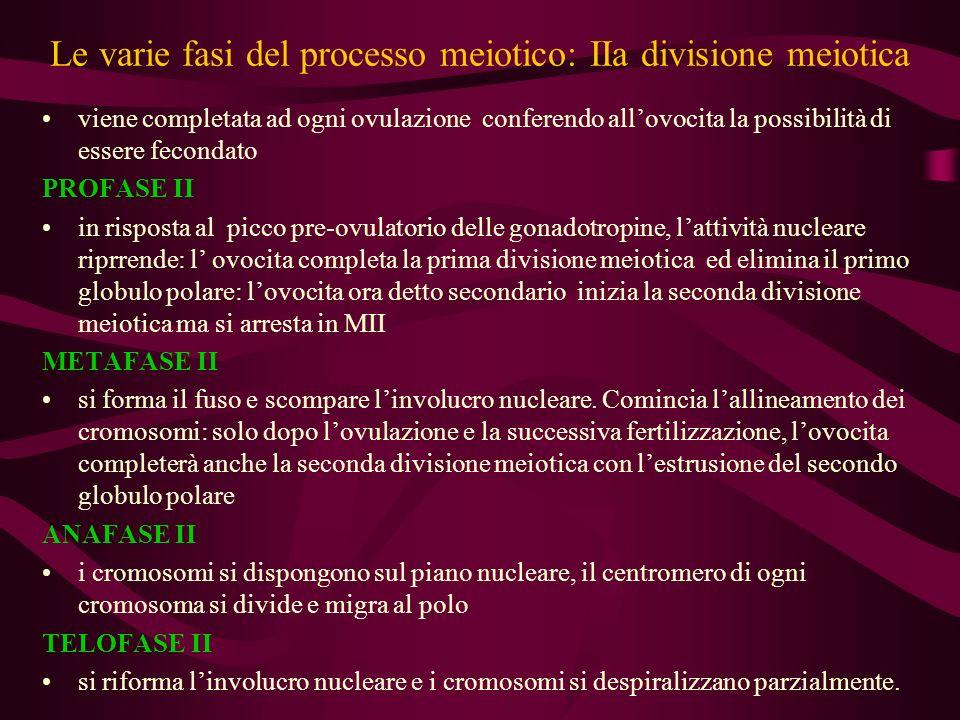 Le varie fasi del processo meiotico: IIa divisione meiotica