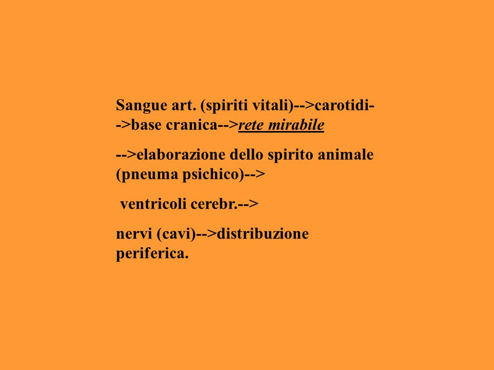 Sangue art. (spiriti vitali)-->carotidi-->base cranica-->rete mirabile