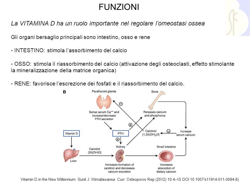 FUNZIONI La VITAMINA D ha un ruolo importante nel regolare l'omeostasi ossea. Gli organi bersaglio principali sono intestino, osso e rene.