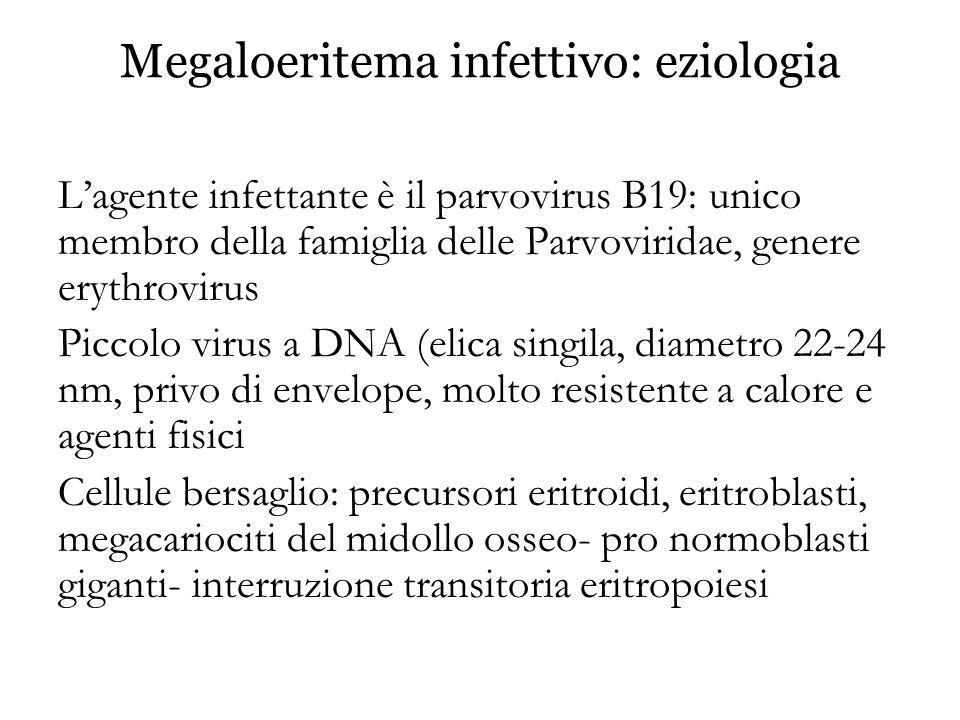 Megaloeritema infettivo: eziologia