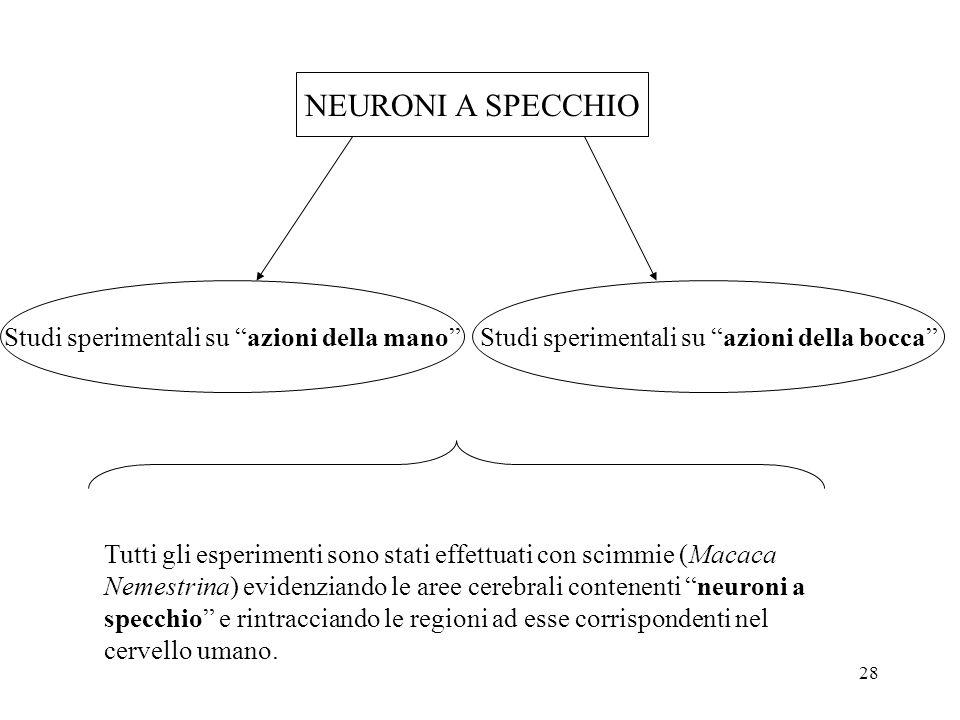NEURONI A SPECCHIO NEURONI A SPECCHIO
