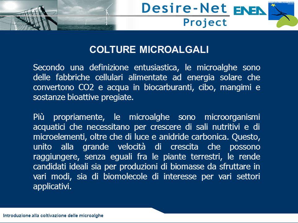 COLTURE MICROALGALI
