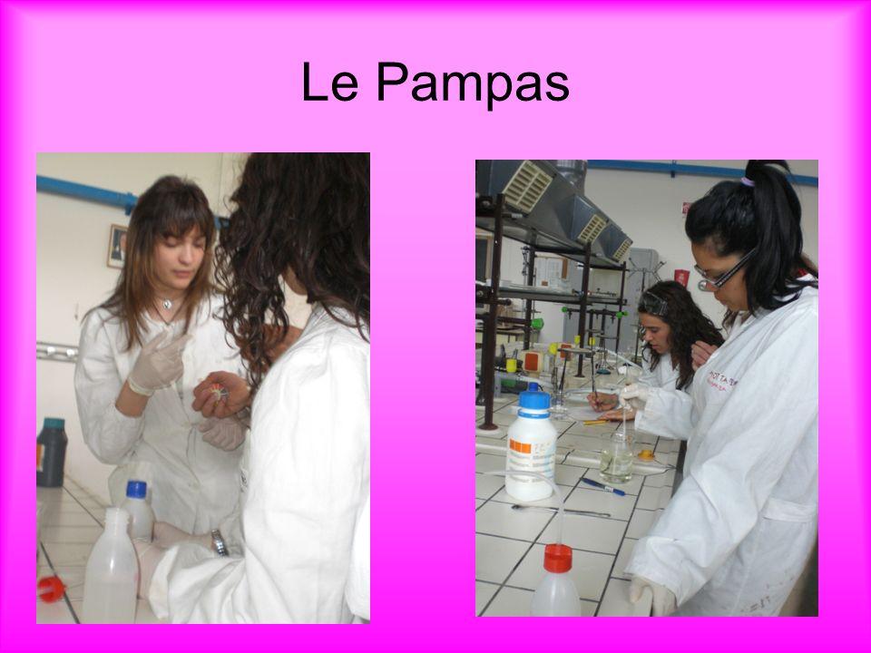 Le Pampas