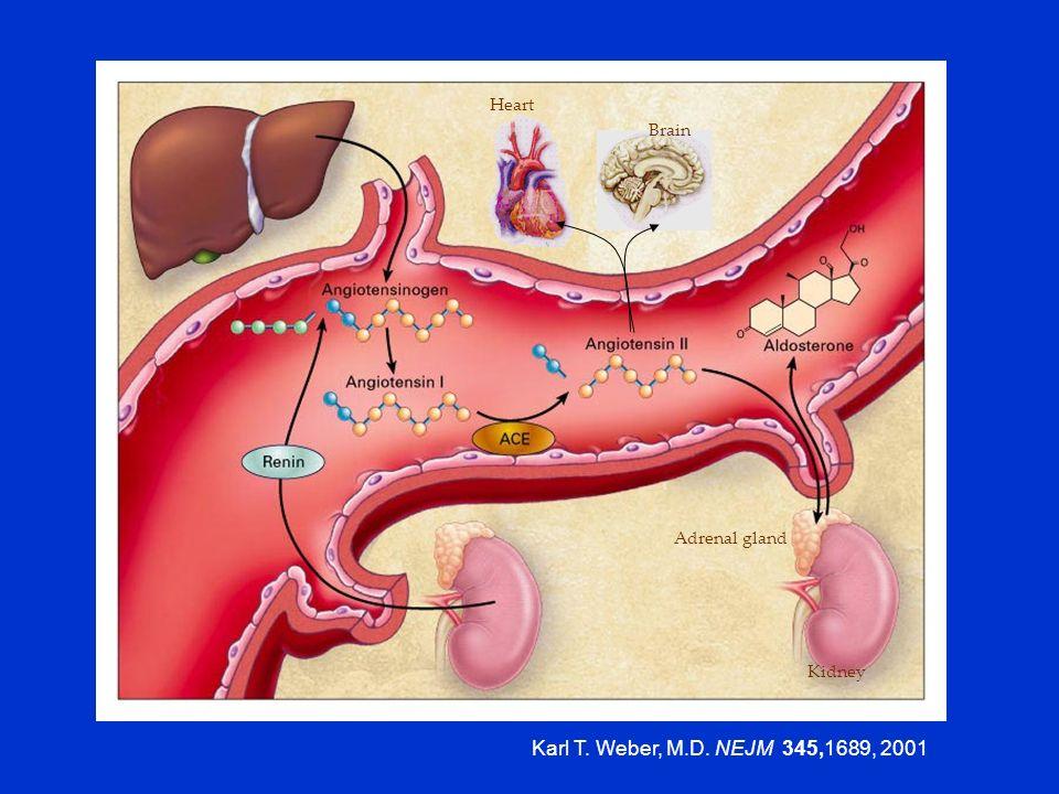 Karl T. Weber, M.D. NEJM 345,1689, 2001 Heart Brain Adrenal gland
