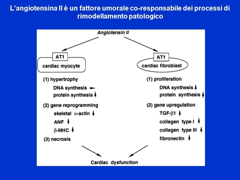L'angiotensina II è un fattore umorale co-responsabile dei processi di